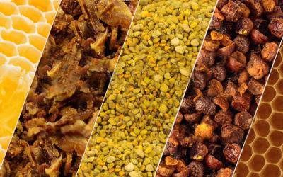 Apicol: Todo el poder de la colmena en una gama de productos para toda la familia